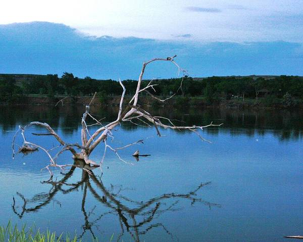 Landscape Poster featuring the photograph Lake Fryer Tree by Val Conrad
