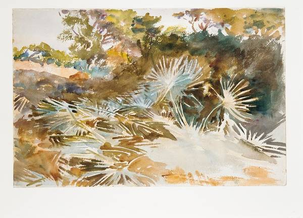 Landscape With Palmettos Poster featuring the painting Landscape With Palmettos by John Singer