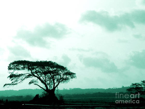 Landscape Poster featuring the photograph Landscape With Tree by Barbara Marcus