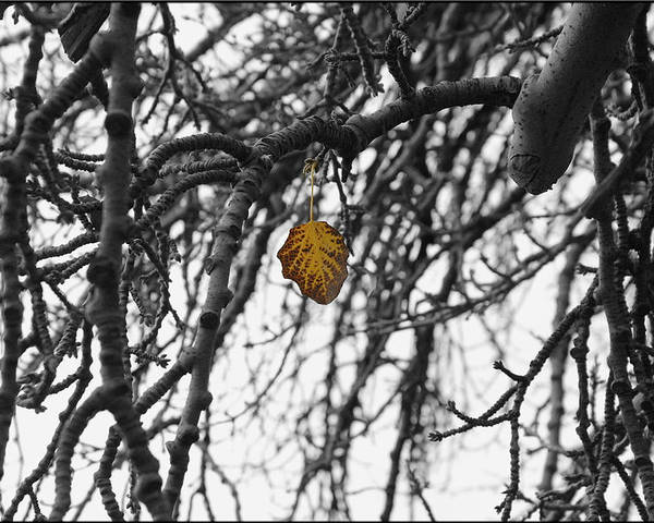 Trees Poster featuring the photograph Last One To Fall by Layne Hardcastle