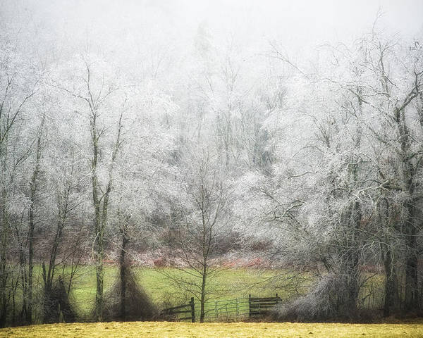 Ice Storm Poster featuring the photograph Late Fall Ice Storm Central Ma 2008 by Richard Danek