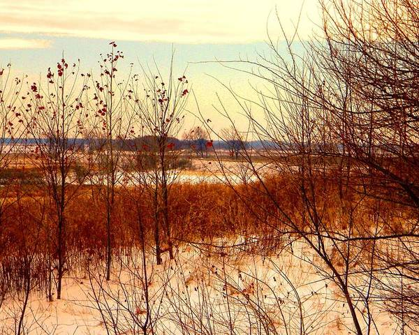 Winter Poster featuring the photograph Late Winter at Emiquon by Helen ONeal