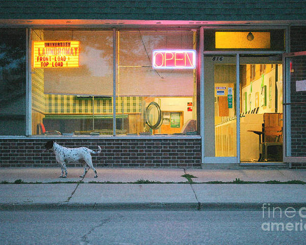 Dog Poster featuring the photograph Laundromat Open by Steve Augustin