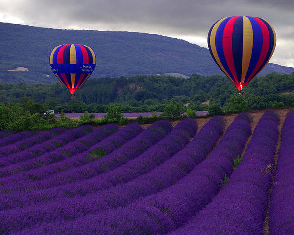 Lavender Fields Poster featuring the photograph Le Matin by John Galbo