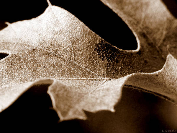 Macro Poster featuring the photograph Leaf Study In Sepia by Lauren Radke