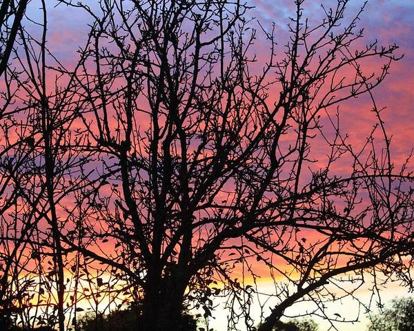 Karen Silvestri Poster featuring the photograph Leafless Silhouette by Karen Silvestri