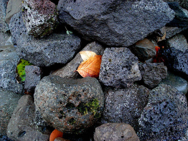 Nature Poster featuring the photograph Leaves And Stones by Marilynne Bull
