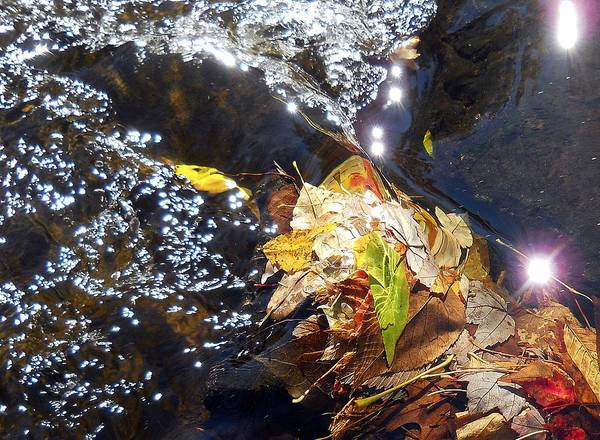 Leaves Poster featuring the photograph Leaves In River by Wolfgang Schweizer