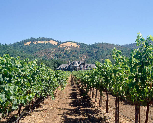 California Poster featuring the photograph Ledson Winery And Vineyard Sonoma County California by George Oze