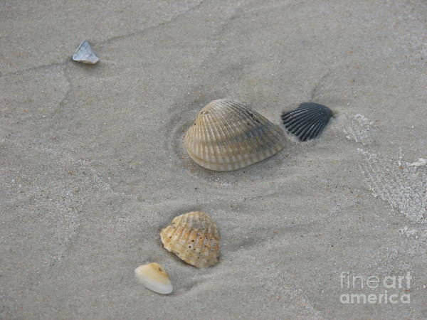 Sand Poster featuring the photograph Left Behind by Kathy Flugrath Hicks