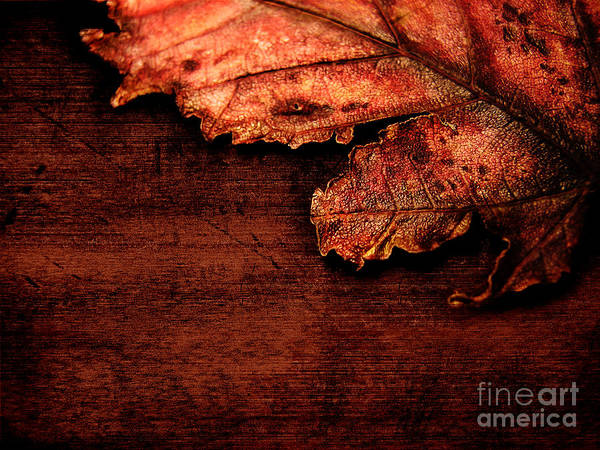 Red Poster featuring the photograph Let Me Hold You... by Dana DiPasquale