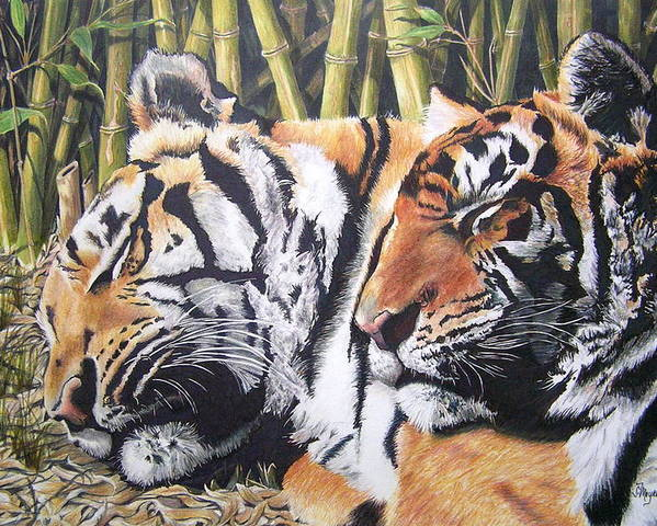 Animals Poster featuring the drawing Let Sleeping Tigers Lie by Susan Moyer