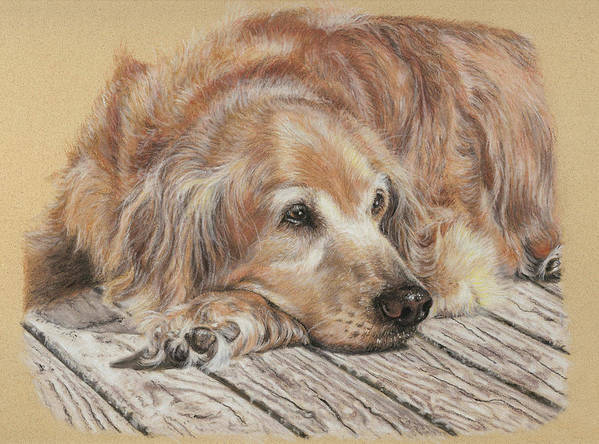 Canine Poster featuring the pastel Lexie by Terry Kirkland Cook