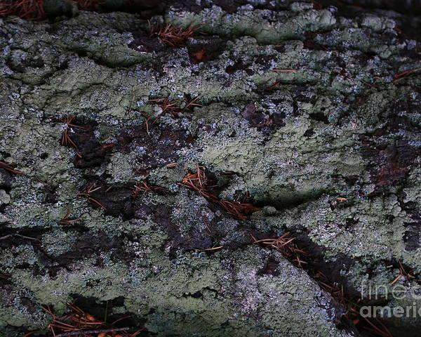 Lichen Poster featuring the photograph Lichen Texture by Nareeta Martin