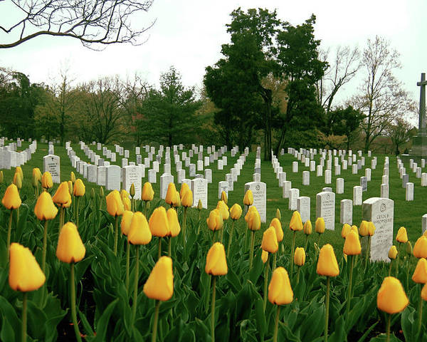 Arlington Poster featuring the photograph Life And Death At Arlington by Jame Hayes