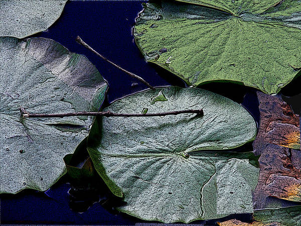 Lily Pads Poster featuring the photograph Life Of A Lily Pad by Nicholas J Mast