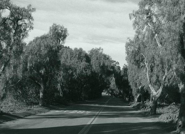Landscape Poster featuring the photograph Lifes Path by Shari Chavira