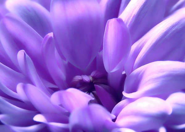 Macro Poster featuring the photograph Light Purple Beauty by Johanna Hurmerinta