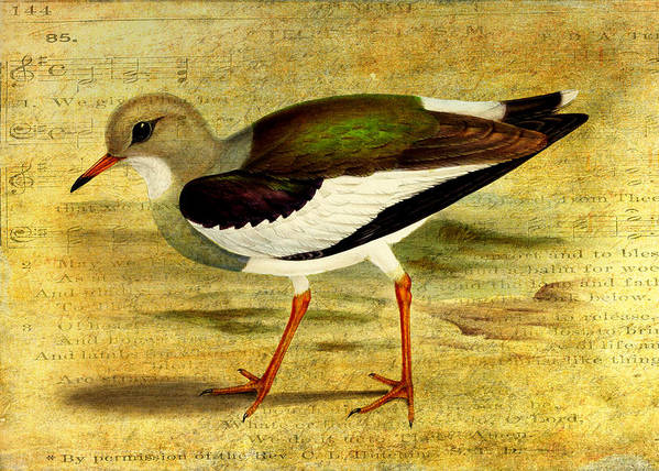 Lapwing Poster featuring the digital art Like A Lapwing by Sarah Vernon