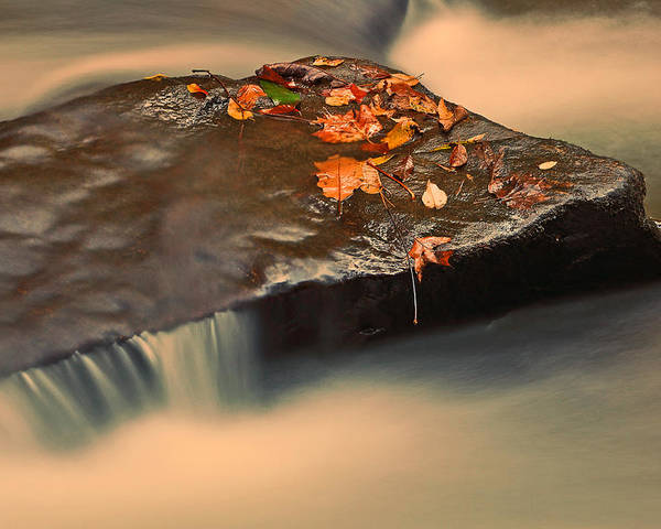 Nature Poster featuring the photograph Like A Rock. by Itai Minovitz