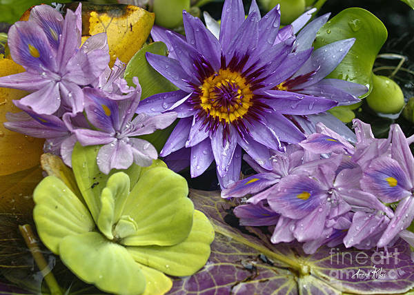 Blue Majestic Flower On Water Poster featuring the photograph Lilies No. 38 by Anne Klar