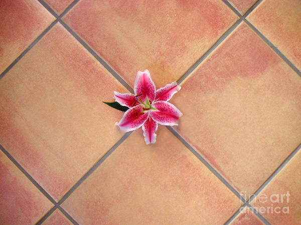 Nature Poster featuring the photograph Lily Alone On Tile by Lucyna A M Green