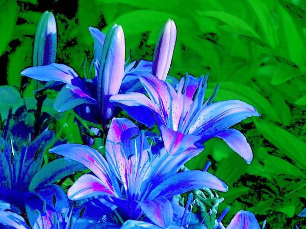 Digital Photography Poster featuring the photograph Lily In Green by Jim Darnall