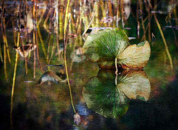 Field Poster featuring the photograph Lily Pad Reflection Oil by Scott Fracasso