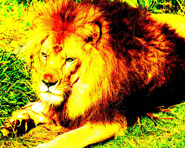Lion Poster featuring the photograph Lion Of Judah by Ken Volok