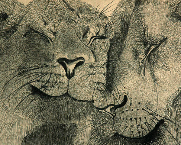 African Anger Angry Animal Anticipating Anticipation Attentive Blijdorp Brown Carnivore Cat Cats Couple Duo Family Fight Lion Lioness Lions Love Pair Pride Sibling Siblings Wild Wiskers Zoo Poster featuring the drawing Lions In Love by Ramneek Narang