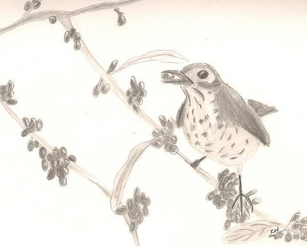 Bird Poster featuring the drawing Little Bird by Kristen Hurley