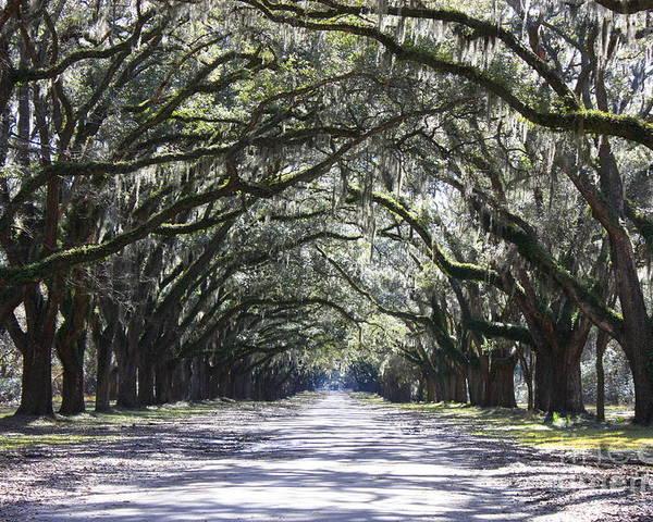 Landscape Poster featuring the photograph Live Oak Lane In Savannah by Carol Groenen