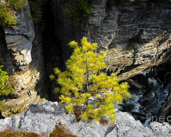 Tree Poster featuring the photograph Living On The Edge by David Lee Thompson