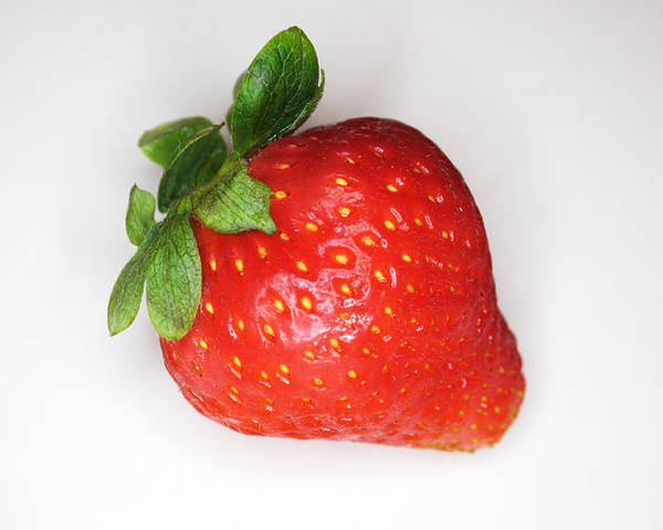 Strawberry Poster featuring the photograph Lone Strawberry by Chris Day