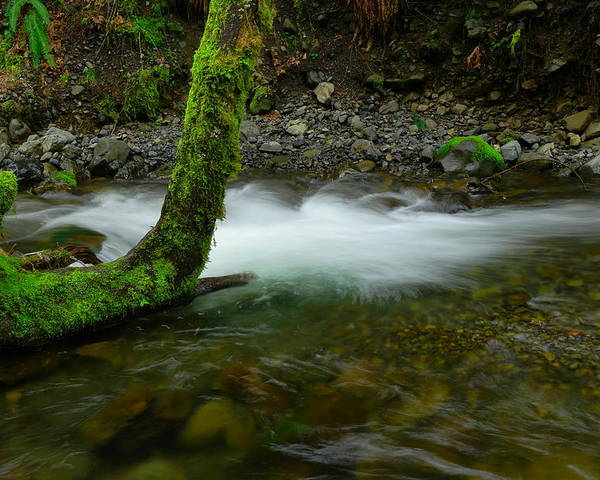 Tree Poster featuring the photograph Lone Tree And Running Water by Jeff Swan