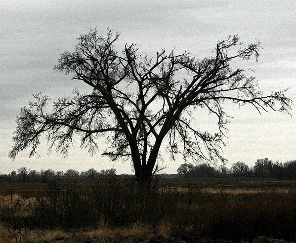 Tree Poster featuring the photograph Lone Tree by Rodger Mansfield
