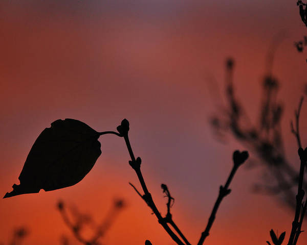 Leaf Poster featuring the photograph Lonely Leaf by Matthew Fredricey