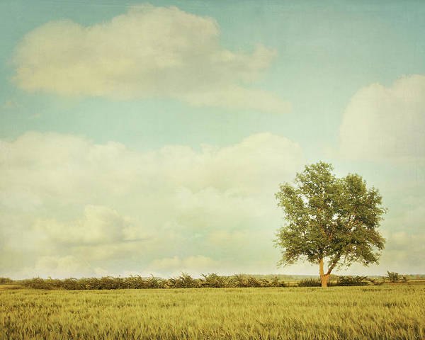 Agriculture Poster featuring the photograph Lonely Tree In Meadow With Vintage Look by Sandra Cunningham