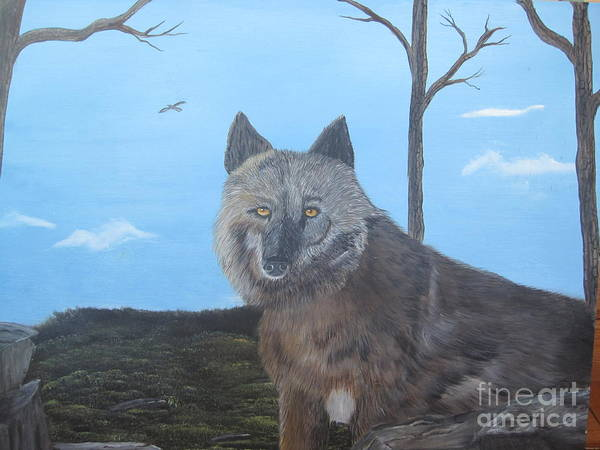 Wolve.wildlife Poster featuring the painting Looking At You by John Nickerson