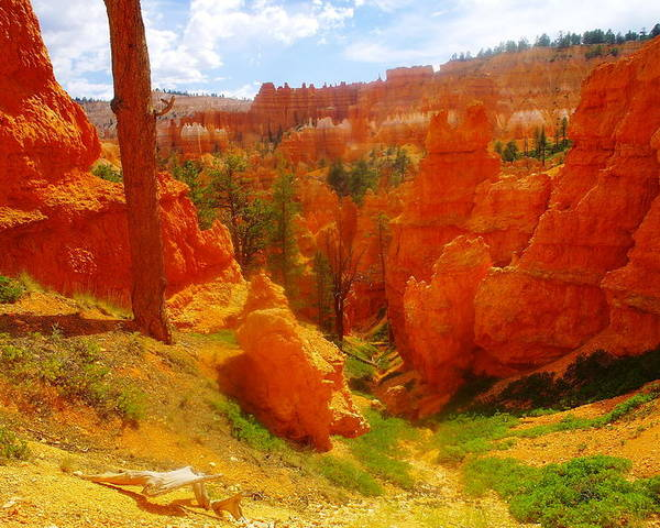 Landscape Poster featuring the photograph Looking Down In Bryce by Jeff Swan