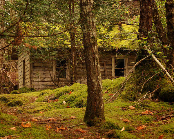 Cabin Poster featuring the photograph Looking For A Loving Family by Diane Smith