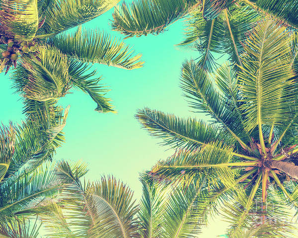 Palm Trees Poster featuring the photograph Looking Up by Delphimages Photo Creations
