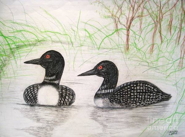 Loons Poster featuring the drawing Loons Watching by Sandra Lunde