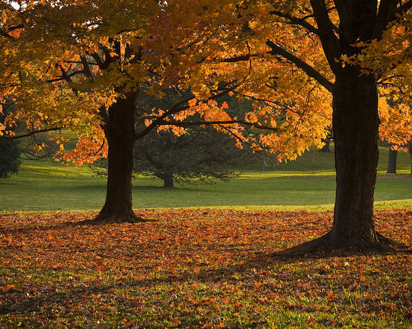Seasons Poster featuring the photograph Loose Park Maple Trees by Chad Davis