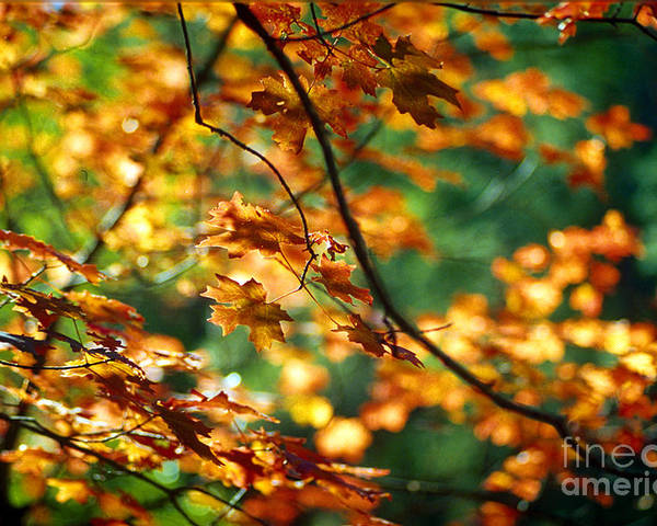 Fall Color Poster featuring the photograph Lost In Leaves by Kathy McClure