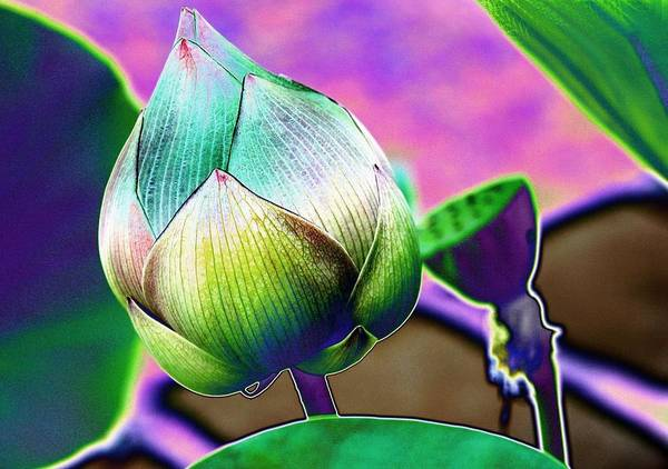 digital Art Poster featuring the digital art Lotus Dreaming 8 by Fran Woods