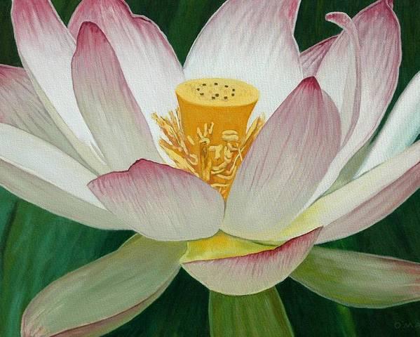Flower Poster featuring the painting Lotus Of Awakening by Allan OMarra