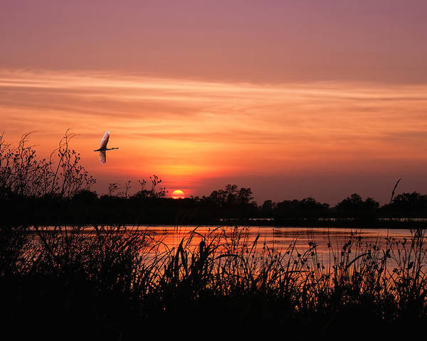 Louisiana Rice Field Poster featuring the photograph Louisiana Rice Field At Sunset by Bonnie Barry