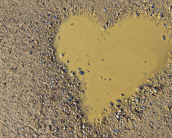 Love Poster featuring the photograph Love In A Muddy Puddle by Meirion Matthias