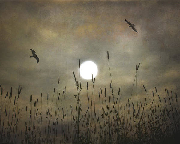 Nature Poster featuring the photograph Lovers Moon by Tom York Images